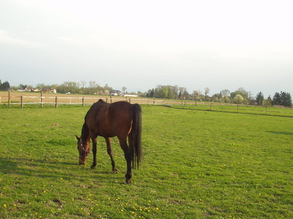 FOTKA - Koně ve výběhu 8