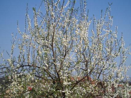 FOTKA - bluma v květu
