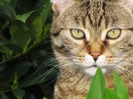 FOTKA - V džungli 2