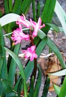 FOTKA - růžová kytička