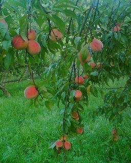 FOTKA - i tohle pěstujeme v Jizerkách:-)