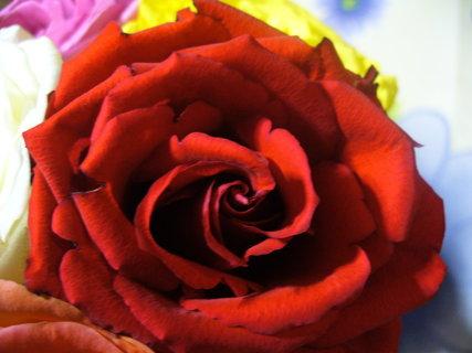 FOTKA - Červené mám ráda