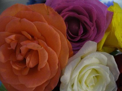 FOTKA - mix růží
