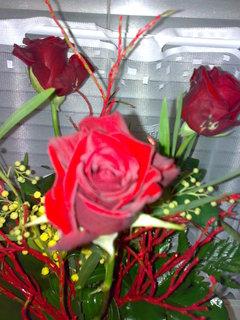 FOTKA - Růže od Miláčka
