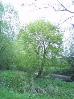FOTKA - Zbytek starého koryta na soutoku Labe a Trotinky s bohatou flórou a faunou