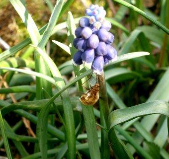 FOTKA - sladký nektar