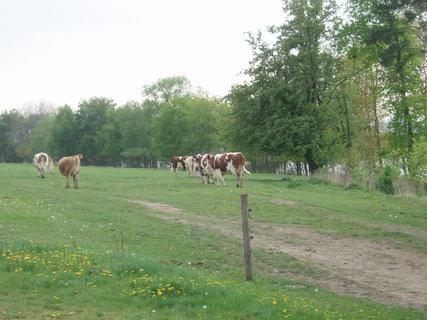FOTKA - z travičky je mléko nejlepší :)