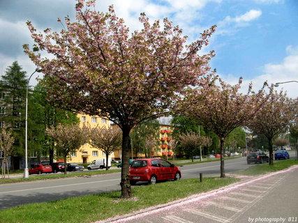 FOTKA - ulice Karviné