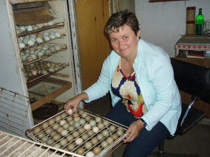 FOTKA - vajíčka se musí otáčet, rosit a zahřívat
