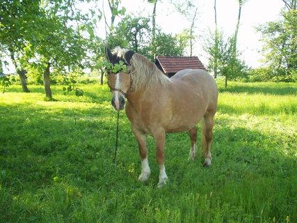 FOTKA - Kůň 8