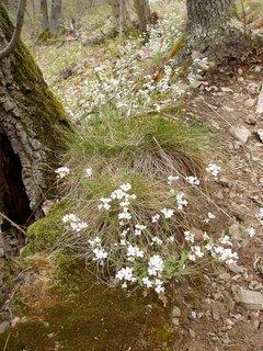 FOTKA - stráně plné květů -jarní toulky v okolí Slapské přehrady