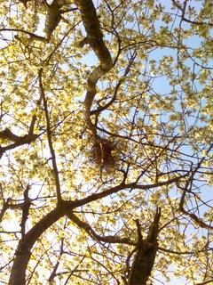 FOTKA - Květen I