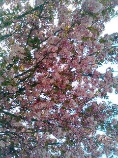 FOTKA - Květen II